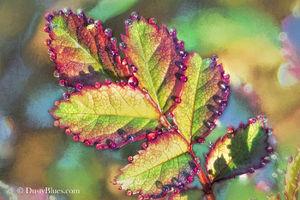 Hocking Hills Photography, Hocking Hills Photographer, Hocking Hills Fine Art Photography, DustyBlues.com, DustyBlues LLC, Logan Ohio
