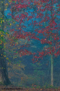 Fall Foggy Colors_2 print