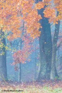 Fall Foggy Colors_25 print