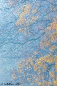 Fall Foggy Colors_27 print