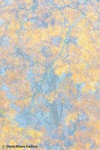 Fall Foggy Colors_28 print