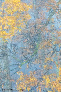 Fall Foggy Colors_29 print