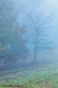 Fall Foggy Colors_31 print