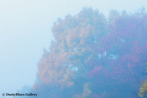 Fall Foggy Colors_32 print