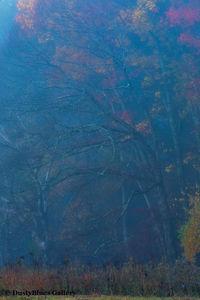 Fall Foggy Colors_33 print