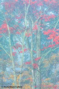Fall Foggy Colors_34 print