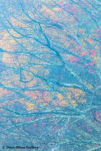 Fall Foggy Colors_35 print
