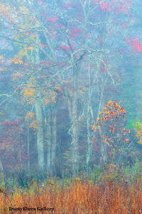 Fall Foggy Colors_37 print