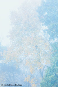 Fall Foggy Colors_39 print