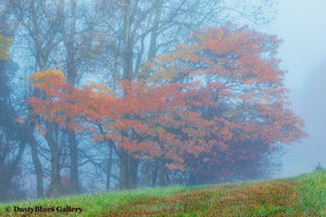 Fall Foggy Colors_43 print