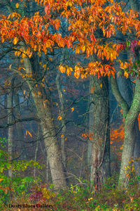 Fall Foggy Colors_44 print