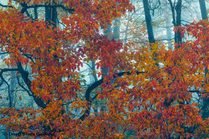 Fall Foggy Colors_46 print