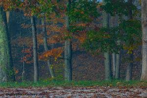 Fall Foggy Colors_47 print