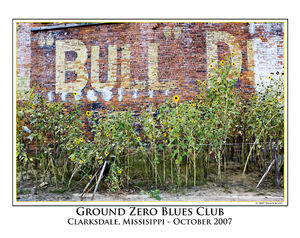 Ground Zero Sunflowers print