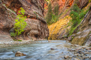 Zion Narrows print