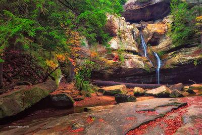 Cedar Falls Glory