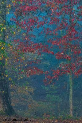 Fall Foggy Colors_2