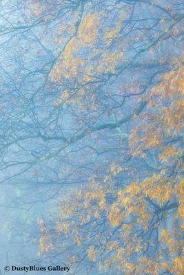 Fall Foggy Colors_27