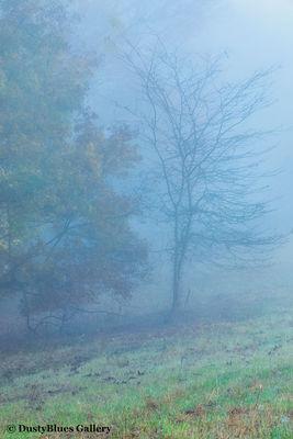 Fall Foggy Colors_31