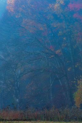 Fall Foggy Colors_33