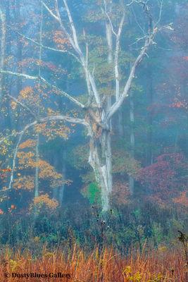 Fall Foggy Colors_36