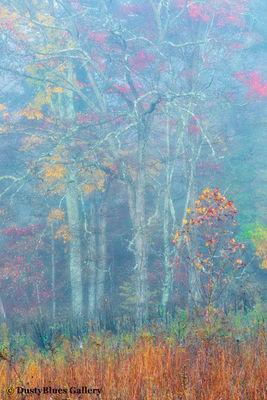 Fall Foggy Colors_37