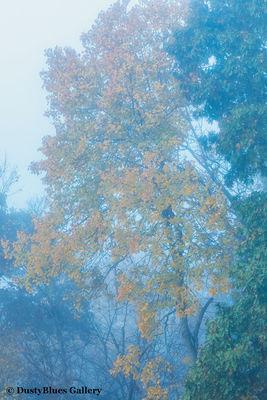 Fall Foggy Colors_38