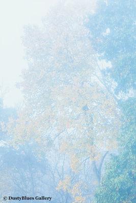 Fall Foggy Colors_39