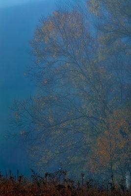 Fall Foggy Colors_40