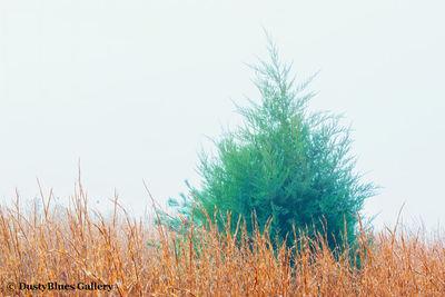 Fall Foggy Colors_41