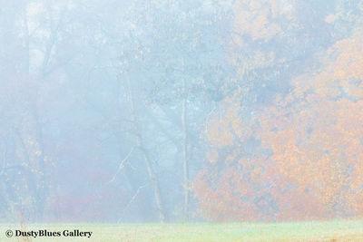 Fall Foggy Colors_42