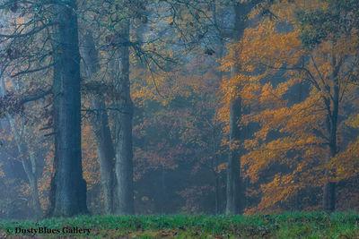 Fall Foggy Colors_