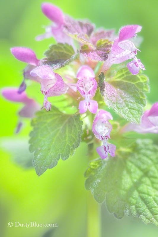 Purple Herbal print