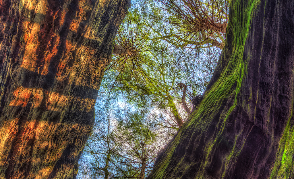 Hocking Hills Photography, Hocking Hills Fine Art Photography, DustyBlues Gallery, DustyBlues Fine Art Photography, DustyBlues Hocking Hills Photography, photo