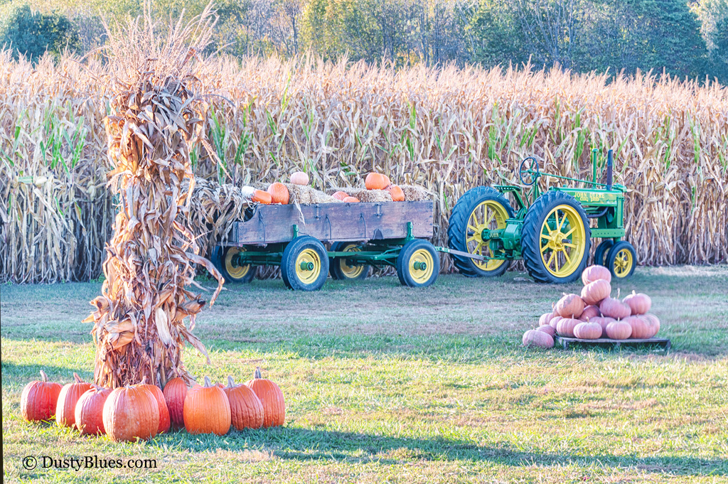 A perfect Fall evening at the pumpkin patch. An old John Deere hitched to a wagon near a corn field maze brings ones thoughts...